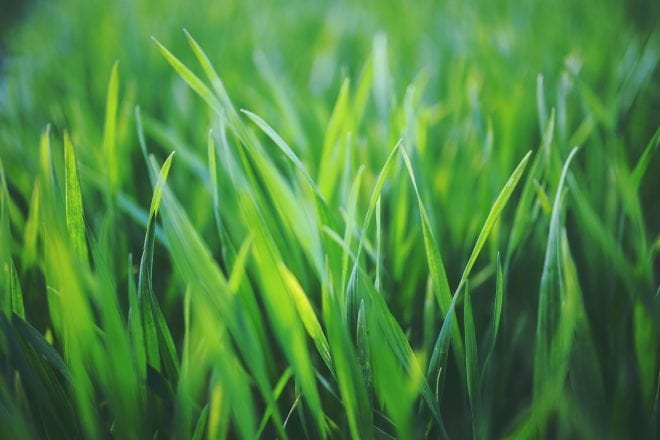 Lawn Care Trivia that Everyone Should Know